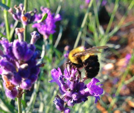 organic farming, hippocrateas, wecologist, wecology, wecology handbook, organic farming,protect bees