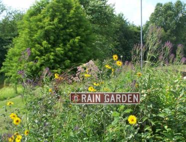 Garage_Rain_Garden_In_Bloom