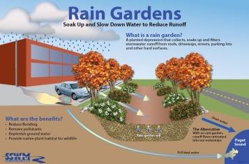 Raingarden_Commercial