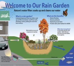 Raingarden_yard