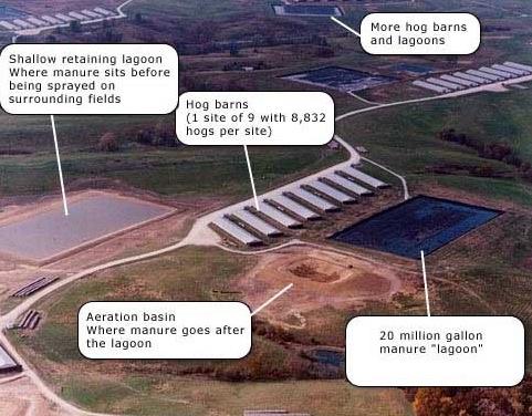 factory-farm-water