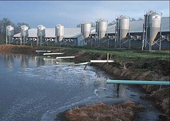 industrial farming, CAFO, factory farming, wecologist, wecology lab, wecology handbook