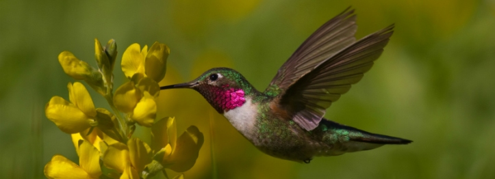 Rocky-Mountain-Natl-Park-Hummingbird-Sharon-Draker