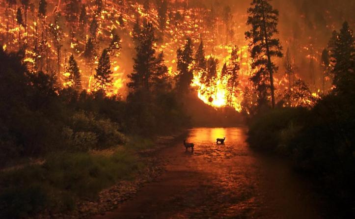 Bitterroot Wildfire Montana